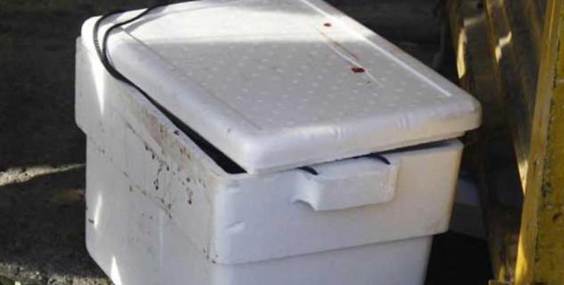 Dentro de una hielera encuentran siete cabezas humanas en Sonora