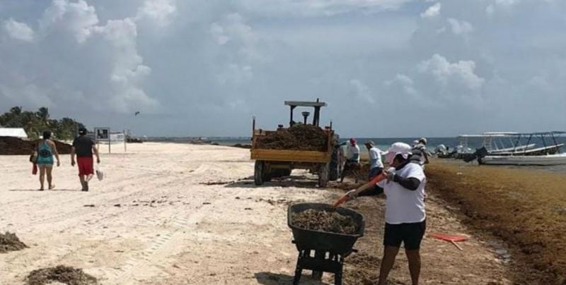 Sargazo en costas del Caribe mexicano podría ser por calentamiento global