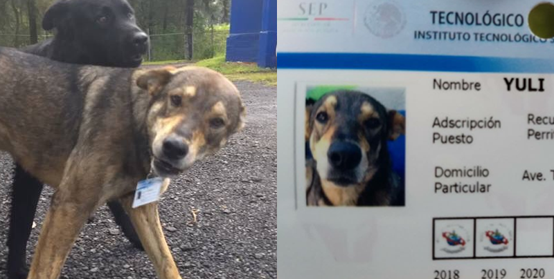 Estos perritos callejeros fueron contratados como perritos policías
