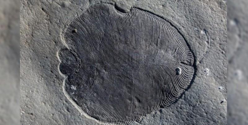 Conoce a Dickinsonia, el animal más antiguo de la Tierra