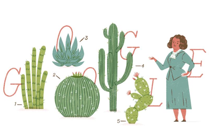 Google celebra con Doodle a Helia Bravo, botánica mexicana
