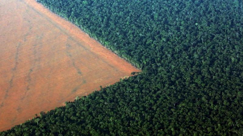 Sabes cuántos árboles se talan anualmente en el mundo