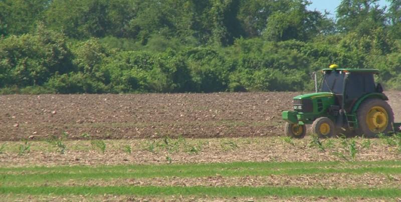 Piden planificar fechas de siembras para evitar colapso en la entrega de agua