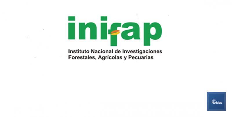 Orientarán a productores que sembrarán trigo y maíz en Cajeme