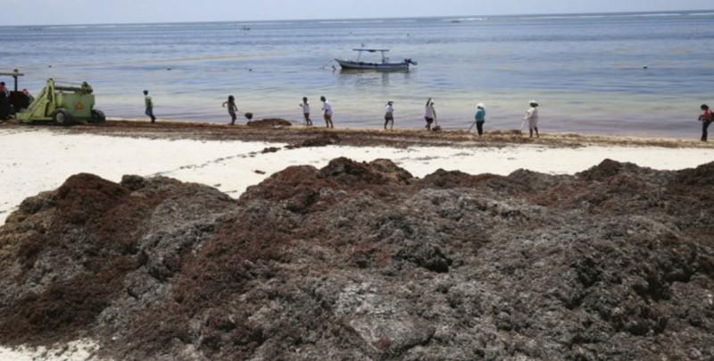 Retiran más de 213 mil metros cúbicos de sargazo en Quintana Roo