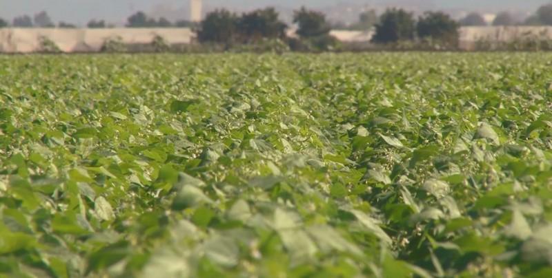 Urge la reconstrucción de la red de canales para evitar retraso del ciclo agrícola