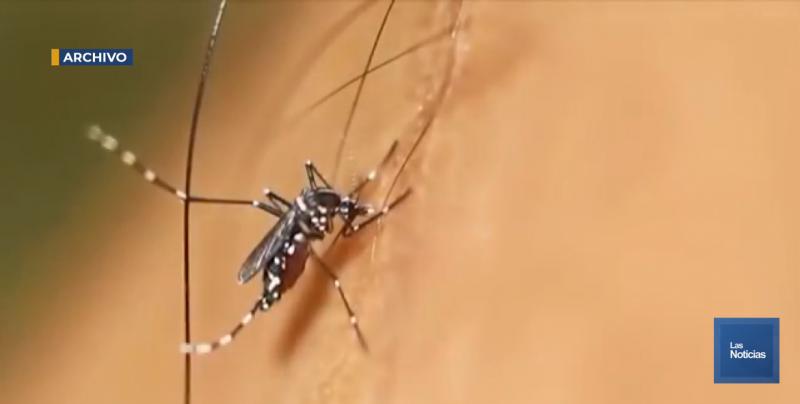 Llaman a no bajar la guardia contra el mosquito transmisor de enfermedades