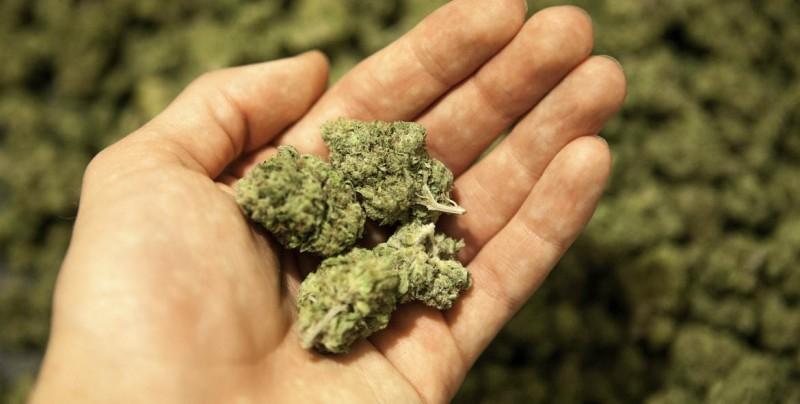 México cada vez más cerca de la legalización de la marihuana; SCJN aprueba quinto amparo