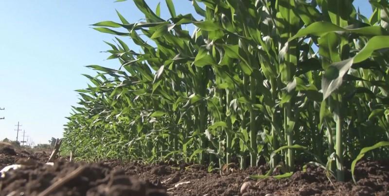 Se reunirán productores agrícolas con diputados federales para acordar presupuesto al campo