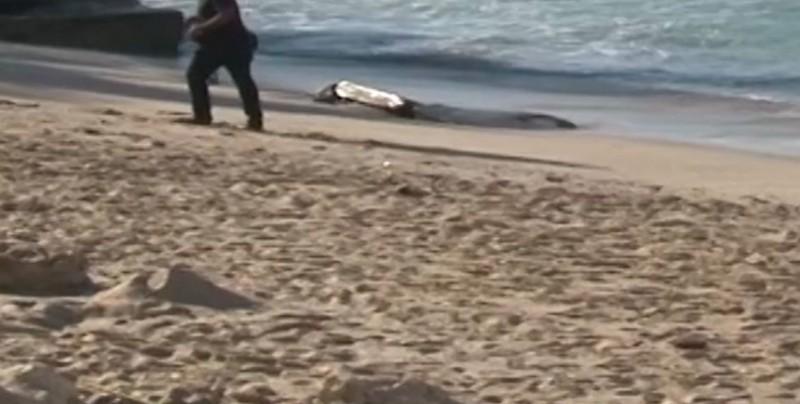 Cruel hallazgo de un feto a la orilla del mar en Mazatlán