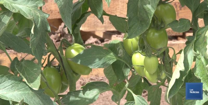 El norte de Sonora es importante generador de producción agroalimentaria