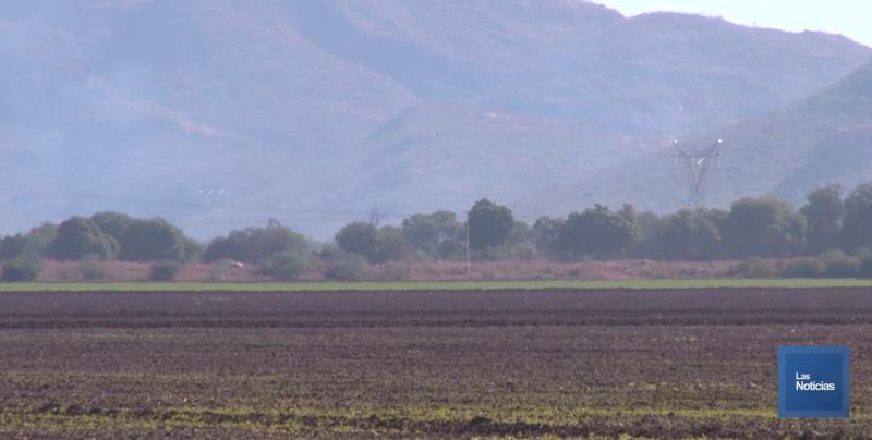 Si tiene futuro la agricultura sostenible en el Valle del Yaqui