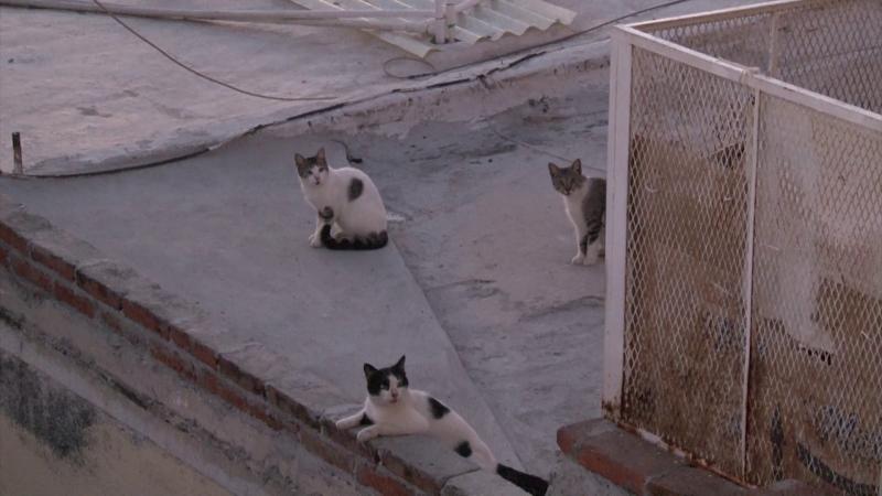Proliferación de gatos genera queja de vecinos