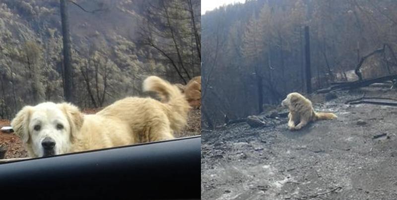 Esperó un mes por sus dueños en su hogar incendiado