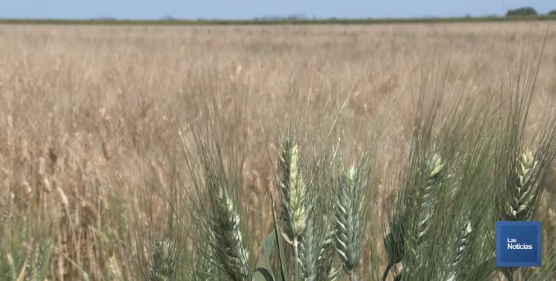 El recorte al presupuesto para el campo, pone en peligro la economía de Sonora