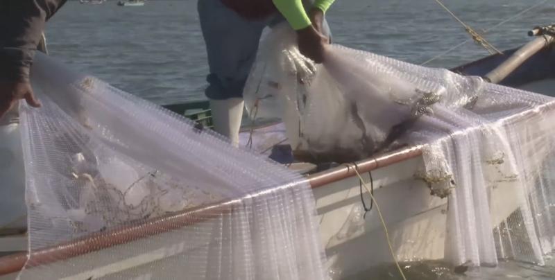 La producción pesquera en Sinaloa durante la temporada ha sido regular