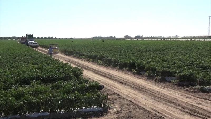 Agricultores deben protegerse contra heladas: AARP