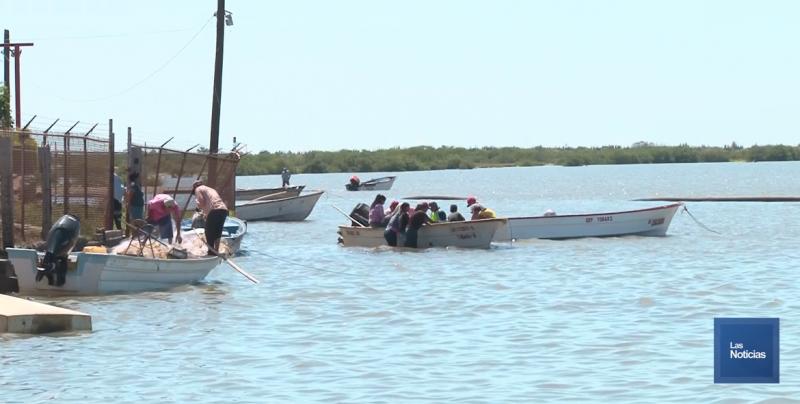 Sonora podría cerrar el 2018 con producción de 70 mil toneladas de camarón