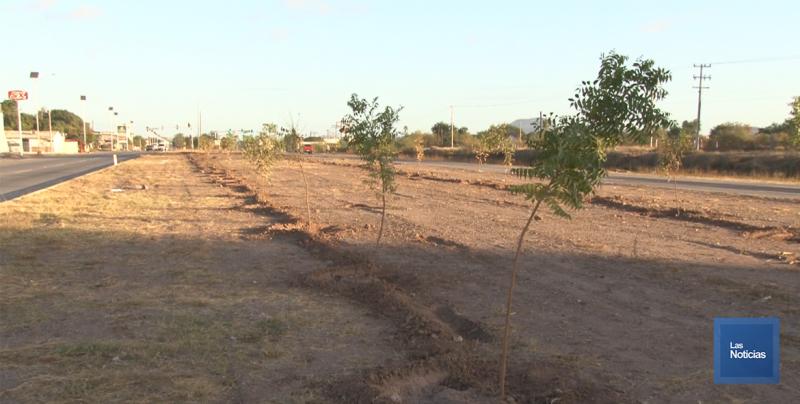 En Cajeme, inician reforestación del norte de la ciudad