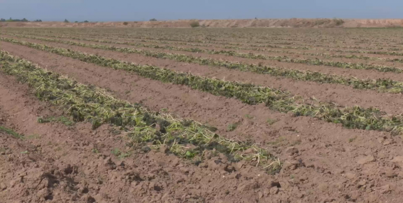 Muchos productores no contaban con seguro agrícola para enfrentar siniestros