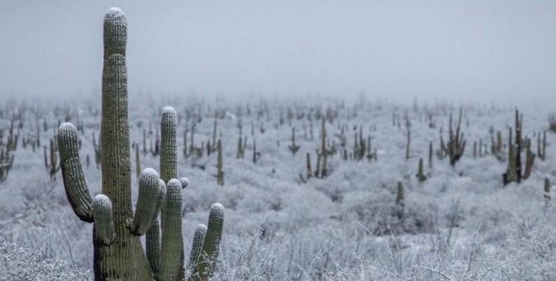 ¡Sorprendente! Nieva en desierto de Sonora