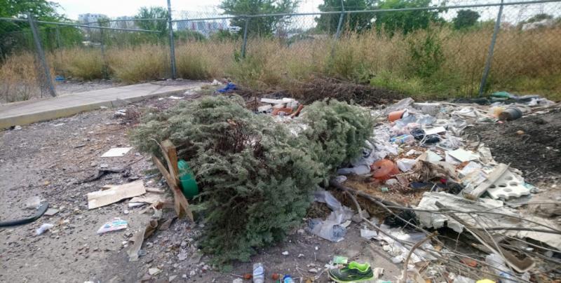 Abandonan pinos navideños, a pesar de instalación de Centros de Acopio