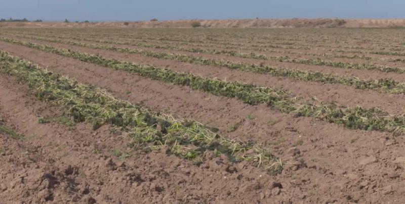 Urgente que se paguen los seguros agrícolas en zonas afectadas por las heladas