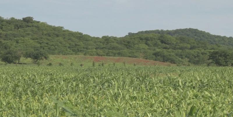 Gestionarán recursos de programas federales para campesinos temporaleros