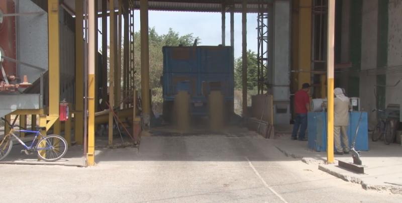 Maiceros de Sinaloa podrán entregar al esquema de Diconsa