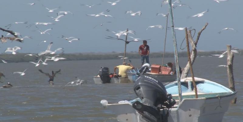 Exigen cooperativistas no incrementar el esfuerzo pesquero de Sinaloa
