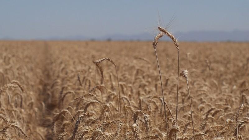 Prevalece incertidumbre en el sector agrícola