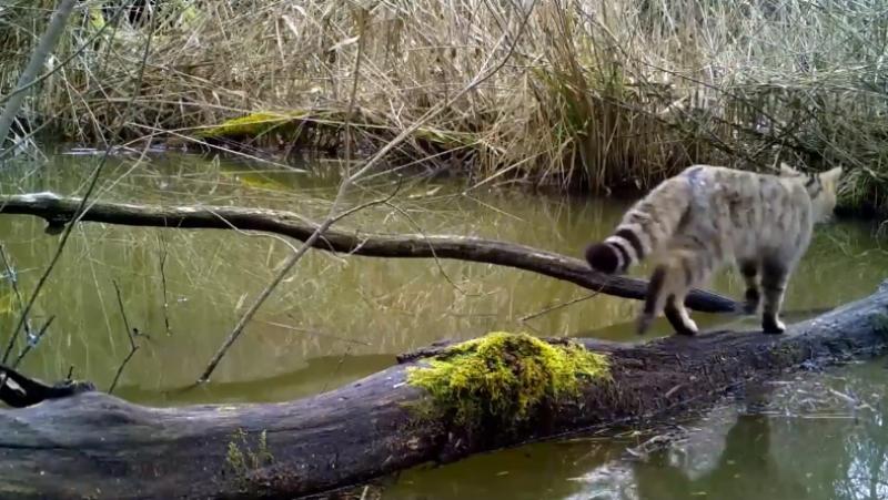 Descubre 'la diversidad de la vida' captada por una cámara oculta en un bosque