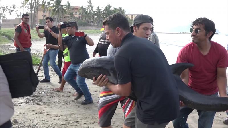 """Muere """"Esperanza"""" la cría de delfín en Acuario Mazatlán"""