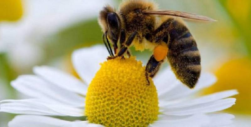 ¿Sabías que las abejas son capaces de sumar y restar?