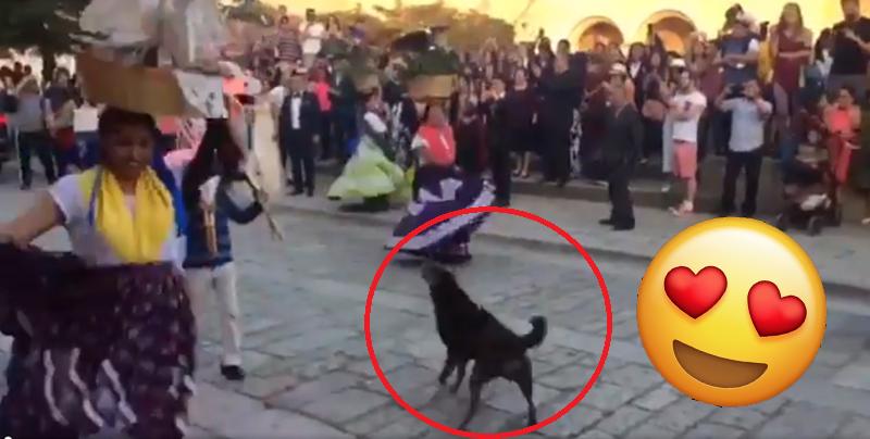 Perro baila y disfruta del desfile de Calenda