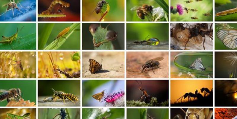 Los insectos están en peligro de extinción