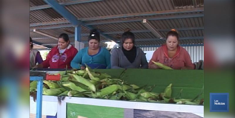 En el Valle del Yaqui, las mujeres son mayor número en empaques