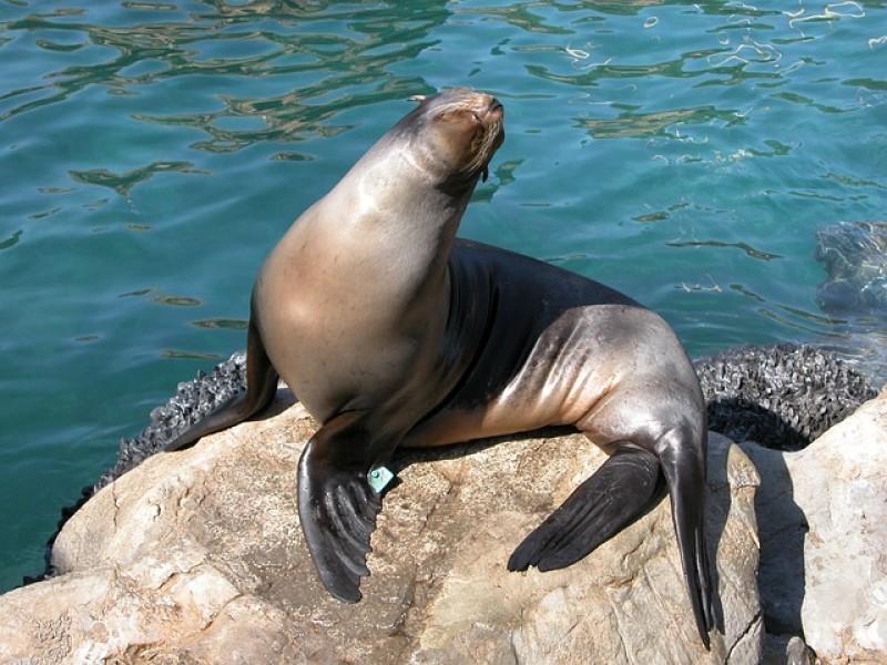Encuentran una USB en heces de foca