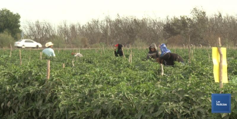 En el sur de Sonora, gerente de horticultores hace un llamado a gobiernos para enviar apoyos