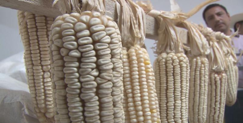 Gobierno Federal busca que el mercado defina los precios del grano