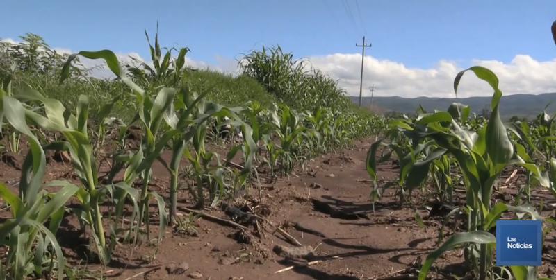 Productores agrícolas de Rosario reciben apoyos