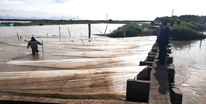 Preparados acuacultores para iniciar temporada de siembra de larva
