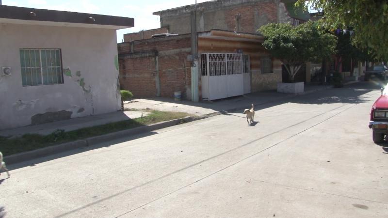 Podrán regularizar terrenos y escrituración en Mazatlán