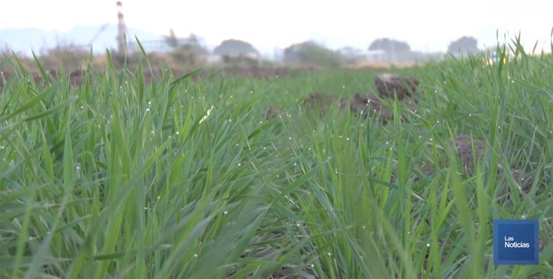 En Navojoa, la SADER contabiliza más de 500 horas frío