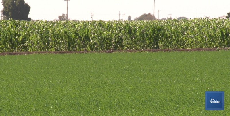 Preocupa a productores agrícolas limitaciones en los programas de apoyo
