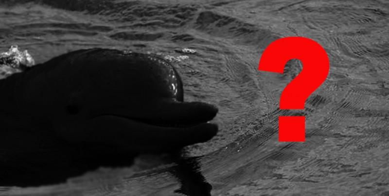 No creerás el nuevo animal que entró a la lista de especies en peligro de extinción
