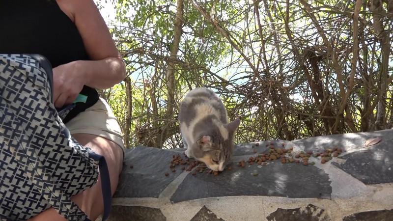 Habrá sanciones para quién abandone gatos en El Faro