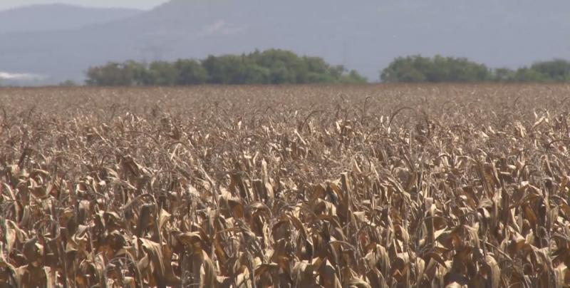 Productores agrícolas solicitan apoyo al Congreso para que interceda ante el Gobierno de AMLO