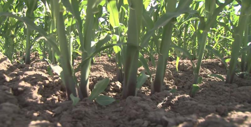 Los productores agrícolas esperan respuesta positiva de parte de López Obrador