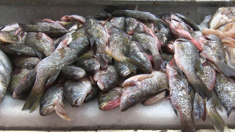 Alertan por consumo de mariscos y pescados en cuaresma